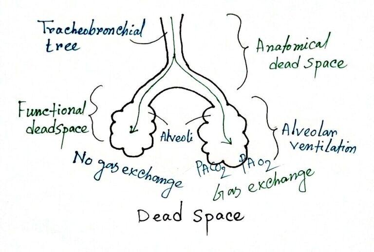 Respiratory dead space